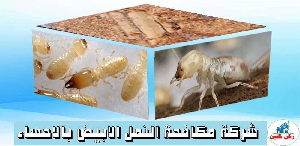 شركة مكافحة النمل الابيض بالاحساء