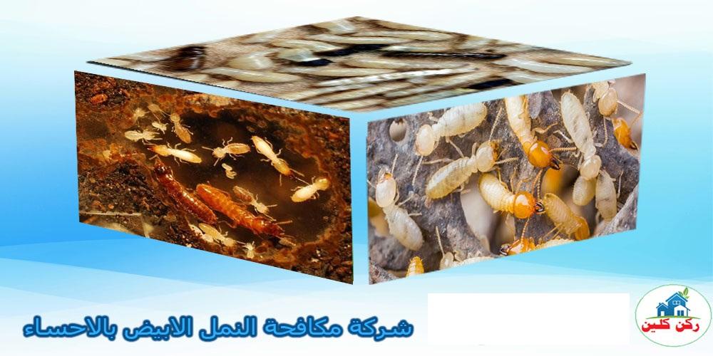 صورة شركة مكافحة النمل الابيض بالاحساء