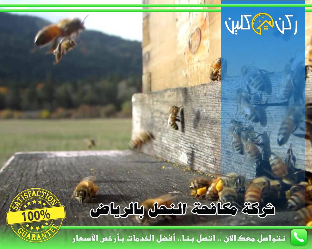 شركة مكافحة النحل بالرياض
